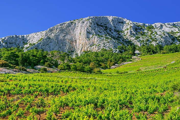 Vignobles sur l'île de Hvar
