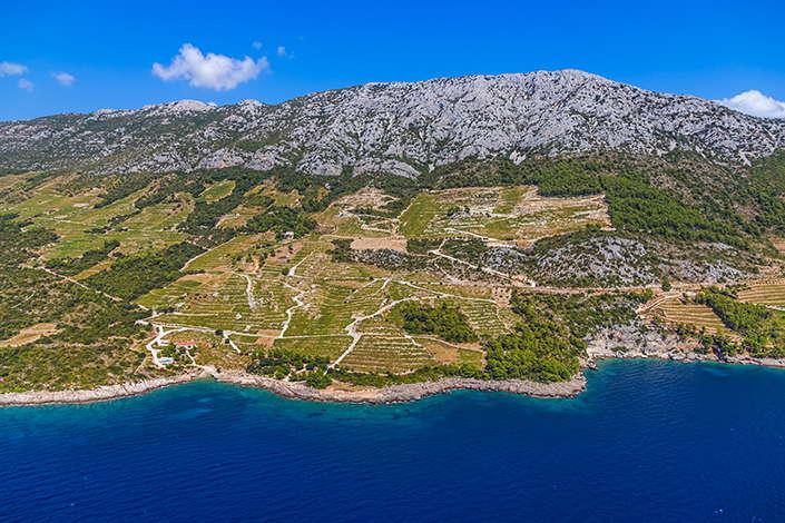 Krajolik i vinogradi na Pelješcu